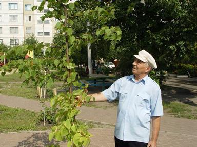 http://kavicom.ru/uploads/sub/2a29f0f3_Cvetnik_vo_dvore_na_Vostocnom_(7).JPG