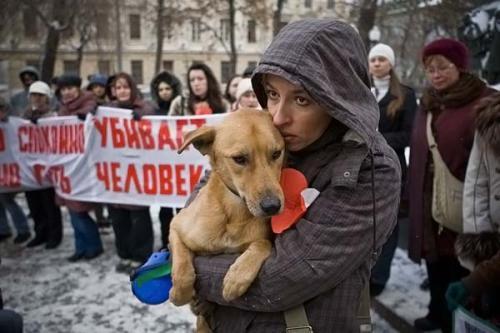 http://kavicom.ru/uploads/sub/c6dba165_dogs_030.jpg